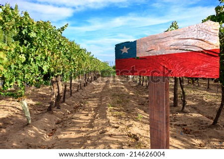 vineyard cabernet sauvignon from Chile - stock photo