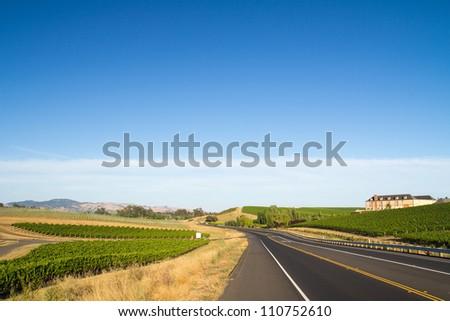 Vineyard field during summer in Napa Valley, California - stock photo