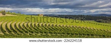 Vineyard in a typical Tuscan landscape, Italy - stock photo