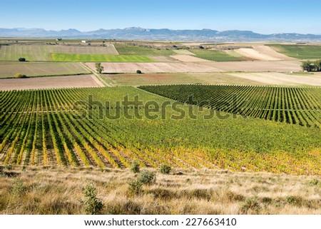 Vineyard in Autumn, La Rioja (Spain) - stock photo