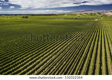 Vineyard in Brancott Valley, Marlborough, South Island, New Zealand, with view of hills and dramatic sky. Photo taken end of summer, March 2012. - stock photo