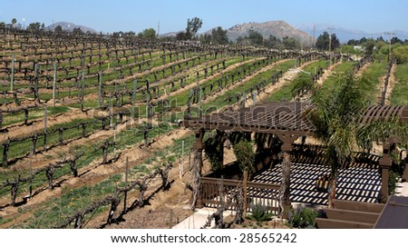 Vineyard in California - stock photo