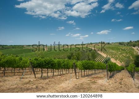 Vineyard in Chianti, Tuscany - stock photo