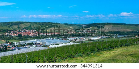 Vineyard in countryside in sunny day - stock photo