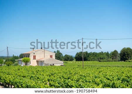 Vineyard in France Provence - stock photo