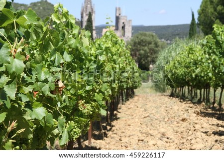 Vineyard in France with old village in back