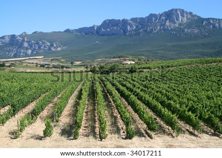 Vineyard in La Rioja, the largest wine producing region in Spain - stock photo