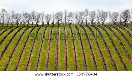 vineyard in Margaret River near town of Augusta - stock photo