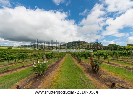 Vineyard in NSW, Australia - stock photo