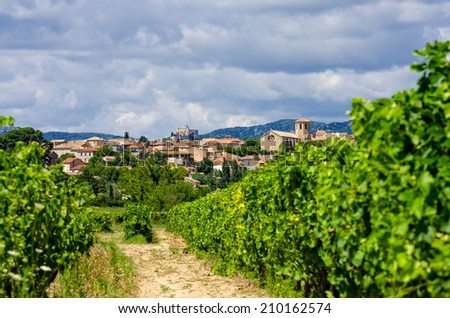 vineyard in provence - stock photo