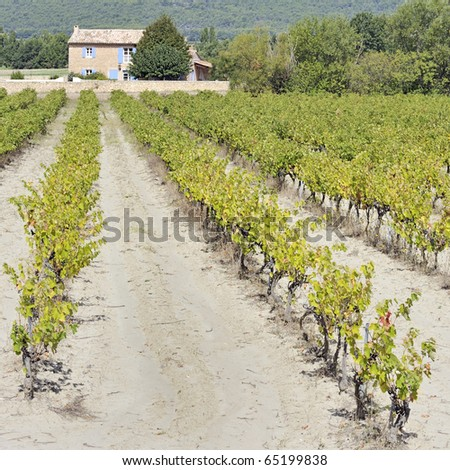 Vineyard in Provence,  France