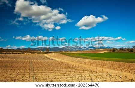 Vineyard in Spain - stock photo