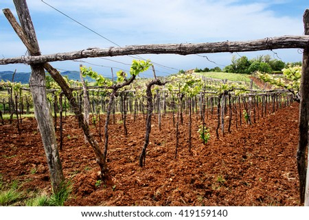 vineyard in spring to slovenian hills