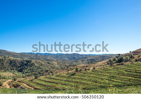 Vineyard in the Comarca Priorat, a famous wine-growing area where the prestigious wine of the Priorat and Montsant is produced. Wine has been cultivated here since the 12th century