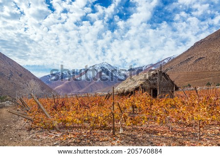 Vineyard in the Elqui Valley for pisco production with Andes mountains in the background in Chile - stock photo