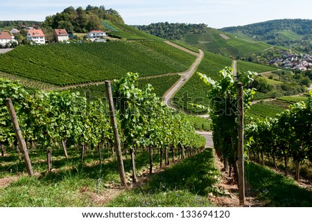 Vineyard in the famous wine making region. Stuttgart capital of the state of Baden-Württemberg Germany. Stuttgart is the only city where wine grapes grown within urban area, Rotenberg, Uhlbach - stock photo