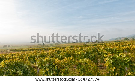 vineyard in the morning with fog and clouds