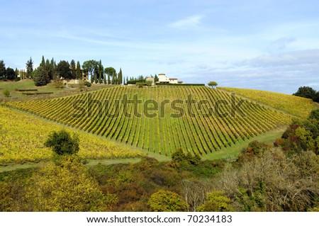 Vineyard in Tuscany - stock photo