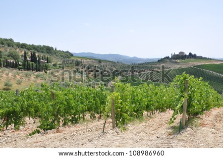 Vineyard in Tuscany, Italy, landscape