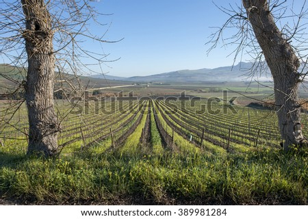 vineyard in winter, Sicily, Italy, Europe - stock photo