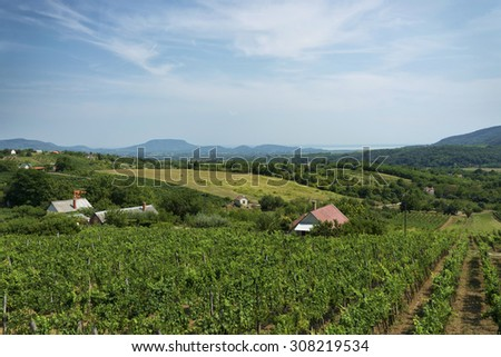 Vineyard landscape at Lake Balaton, Hungary - stock photo