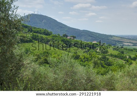 Vineyard landscape, during summer at Euganean hills - stock photo