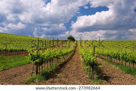 Vineyard landscape in Hungary