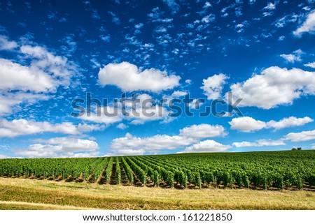 Vineyard landscape, Montagne de Reims, France - stock photo
