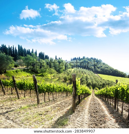 Vineyard landscape with a beautiful blue sky  and clouds in Italy in the area of Chianti
