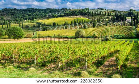 Vineyard near Montalcino in Tuscany - stock photo