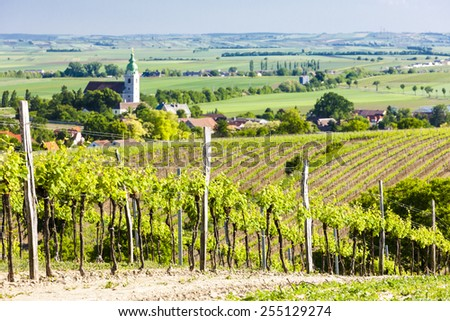 vineyard near Unterretzbach, Lower Austria, Austria - stock photo