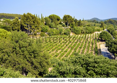Vineyard of Le Castellet, commune in the Provence-Alpes-Cote of Azur region in southeastern France - stock photo