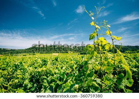 Vineyard of the South of France. Sunny summer day. Agricultural concept with Dramatic sky and Focus on Vine in Foreground - stock photo
