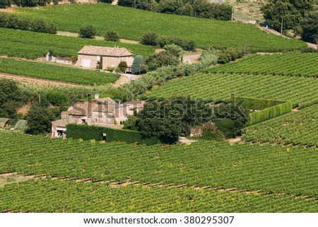 Vineyard of the South of France. Sunny summer day. Agricultural landscape concept