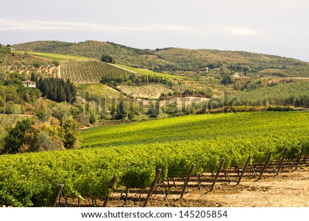 Vineyard on a hill at sunset - stock photo