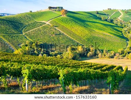 Vineyard on hills - stock photo