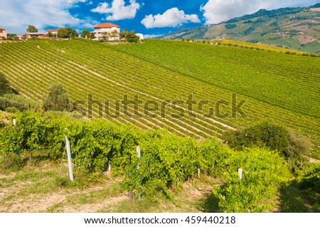 Vineyard on hills