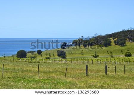 Vineyard on Kangaroo Island, South Australia - stock photo