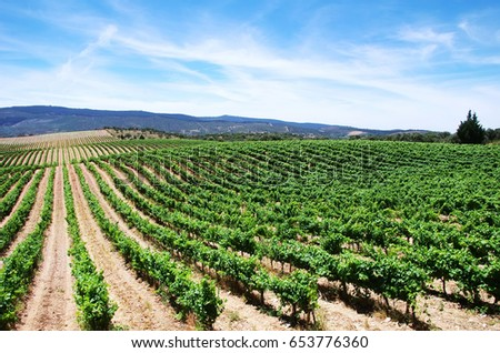 vineyard plantation in the Alentejo region, Portugal
