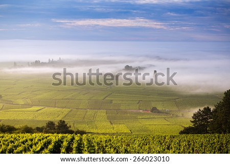 Vineyard. Pommard, Cote de Beaune, d'Or, Burgundy, France - stock photo