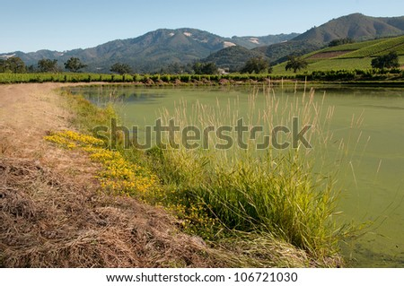 Vineyard Pond - stock photo