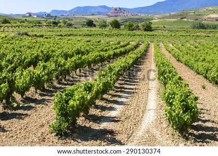Vineyard, San Vicente de la Sonsierra as background, La Rioja - stock photo