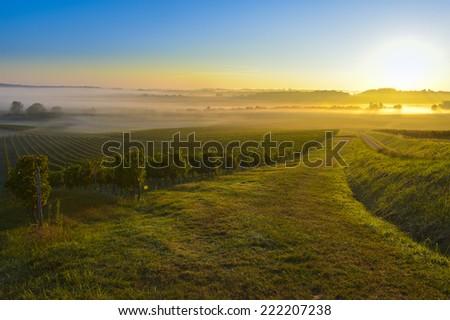 Vineyard Sunrise in Bordeaux Vineyard-France - stock photo