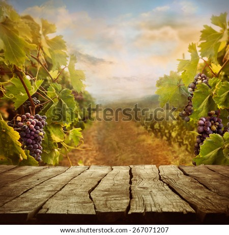 Vineyard tabletop design. Wine background. Autumn design with vineyard and empty display.  Autumn grapes harvest