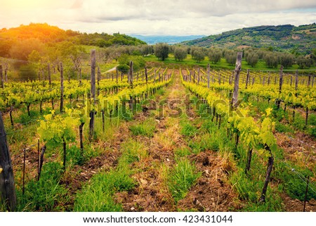Vineyard valley against mountains - stock photo