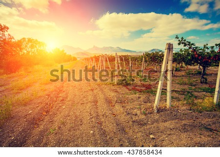 Vineyard valley against mountains at sunset light - stock photo