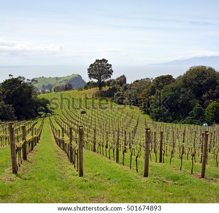 Vineyard vertical panoramic view at Stony Batter on Waiheke Island, Auckland, New Zealand