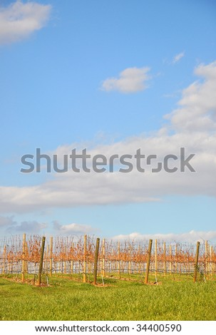 Vineyard with a vibrant cloud filled sky and bright green grass.