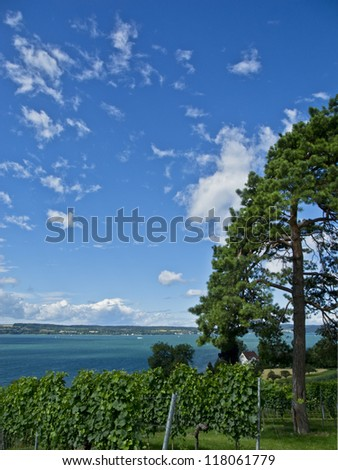 vineyard with beautiful view to the lake constance