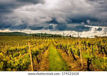 Vineyard with landscape view and clouds during dawn